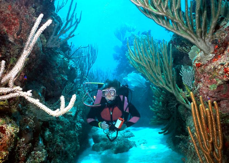 divers_roatan-2